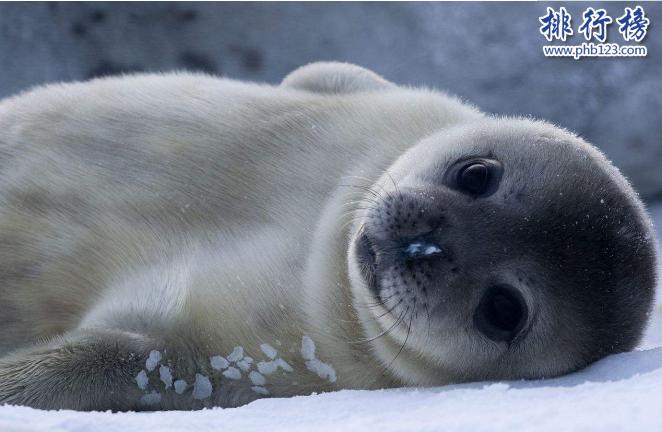 世界十大動物殺手:北極熊一巴掌可以拍到你腦漿崩裂,千萬小心!